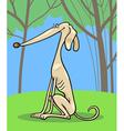 greyhound dog cartoon vector image vector image