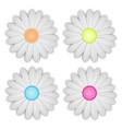 white daisy flower on white background vector image vector image
