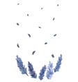 watercolor lavender vector image