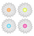 white daisy flower on white background vector image