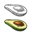 half avocado with seed vintage engraved vector image vector image