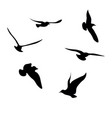 black seagulls silhouettes collection vector image