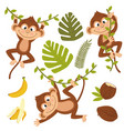set of isolated monkey with plants and fruits vector image