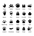Animal and reptile footprints vector image
