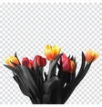 Bouquet color beautiful tulips a transparent vector image