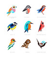 different birds set lilac breasted roller vector image