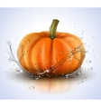 Pumpkin isolated on white with splashes of water vector image