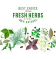 seamless border with herbs and spices vector image