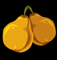 Two yellow simple pears ripe sweet fruits vector image vector image