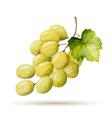 Watercolor branch yellow grapes vector image
