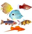 Aquarium fish-3 vector image vector image