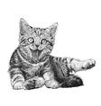 Cat 08 vector image