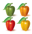 Bell peppers vector image