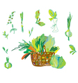 Vegetables and greens set with basket vector image