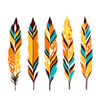 Bird colored feathers set vector image