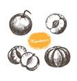 set mandarins whole and peeled vector image