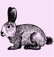 cottontail rabbit vector image
