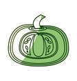 fresh pumpkin vegetable vector image