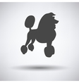 Poodle icon vector image