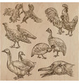 farm animals birds - an hand drawn pack collection vector image