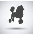 Poodle icon vector image