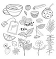 tea hand drawn isolated collection herbal plants vector image