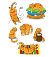cat cartoon set vector image