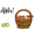 wicker basket full of apples isolated on white vector image