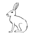 hare vector image