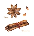 Watercolor cinnamon sticks and anise vector image
