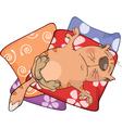 Cat on pillows Cartoon vector image