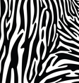 abstract skin texture of zebra vector image