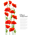 Flower background with poppies vector image