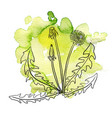 dandelion at watercolor background vector image