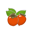Persimmon Isolated on White vector image