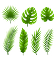 Tropical palm tree leaves collection vector image