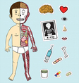 boy body anatomy vector image