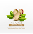 group of pistachio nuts isolated vector image