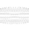 anatomically correct teeth vector image