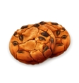 Chocolate cookies detailed vector image
