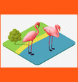 flamingo eps vector image