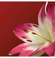 Pink Lily On Burgundy Background vector image