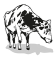 Spotted Milk Cow vector image