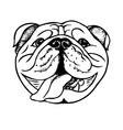 bulldog face vector image