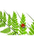 Fern Leaf and Ladybug vector image vector image