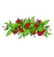 Raspberry Border vector image vector image