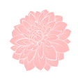dahlia flower isolated on white vector image
