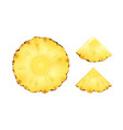 pineapple slices vector image vector image