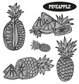 hand drawn pineapples vector image