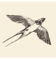 Swallow Bird Engraved Sketch vector image